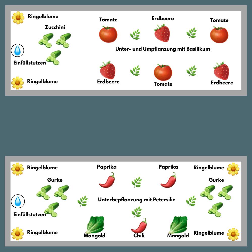 Krumm & Fein Mischkulturen für das Hochbeet mit Wasserspeicher: Bepflanzungsplan.
